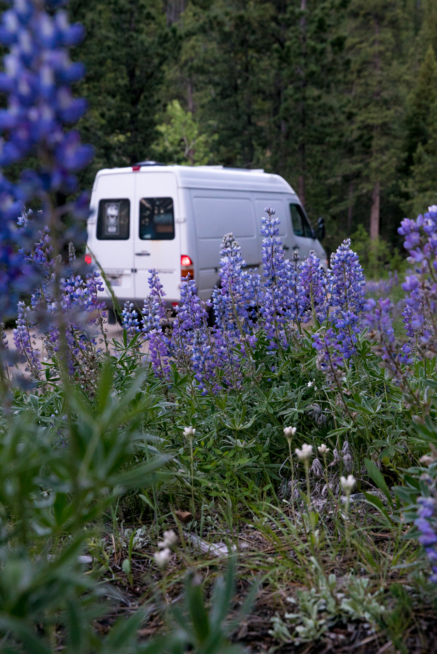 Nemo the van and Lupine